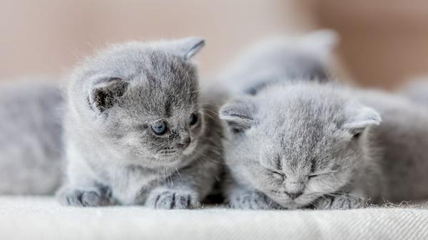 Как в домашних условиях можно избавить котёнка от блох